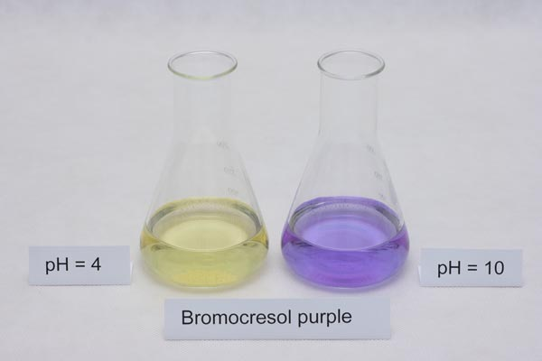 colors of bromocresol purple indicator in different pH solutions