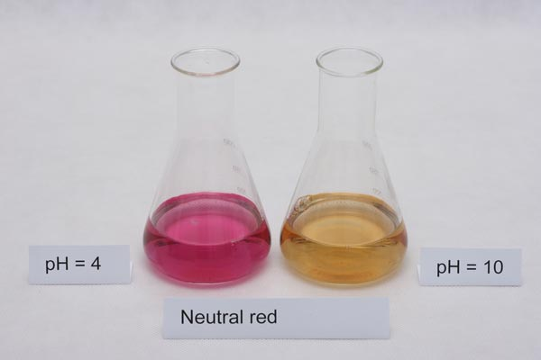 colors of neutral red indicator in different pH solutions