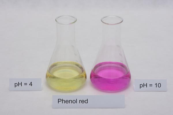 colors of phenol red indicator in different pH solutions